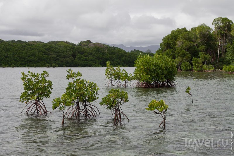 На микронезийском острове Понпеи / Фото из Микронезии