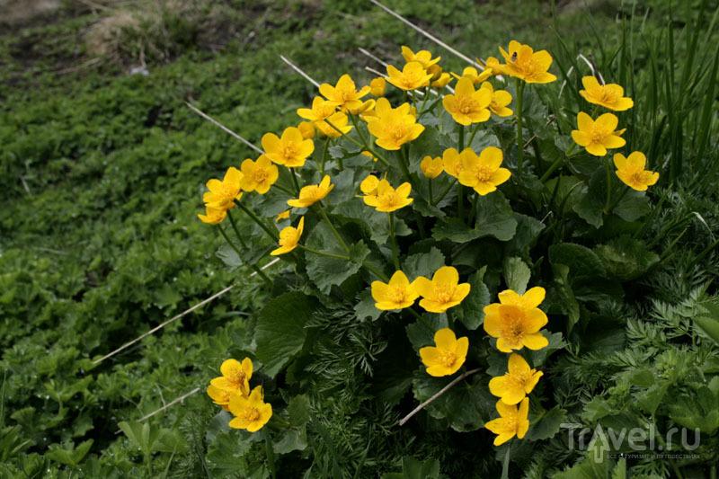 Цветы в горах Швейцарии / Фото из Швейцарии