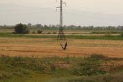 Птица на фоне поля / Киргизия