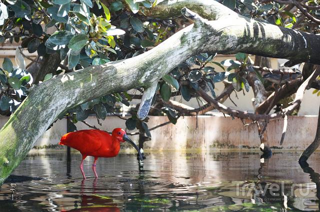 Птица в пруду / Испания