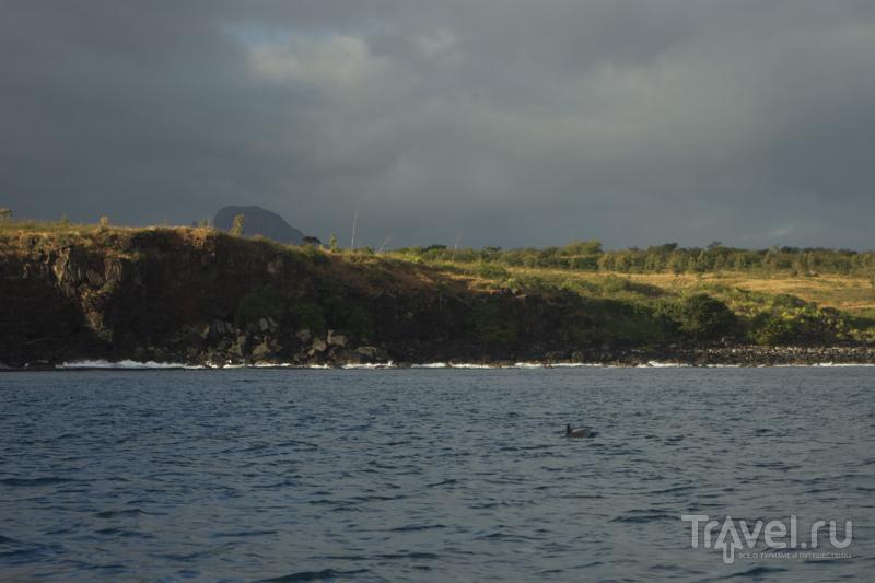 Дельфины проплывают у побережья Маврикия / Фото с Маврикия