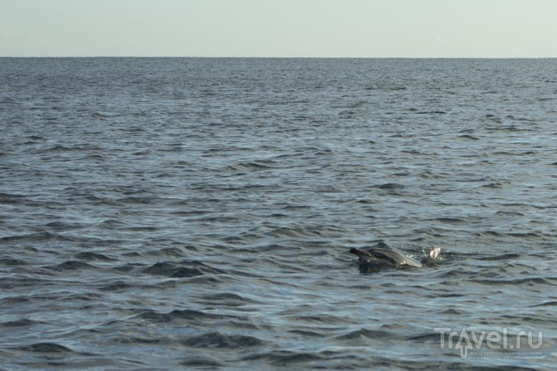 Дельфин с любопытством выглядывает на лодку с туристами, Маврикий / Фото с Маврикия