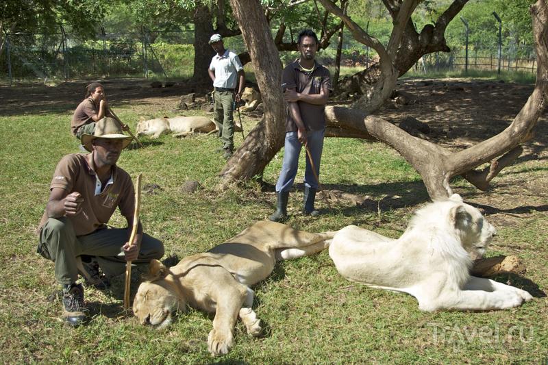 Общение с большими кошками – под присмотром сотрудников парка Казела, Маврикий / Фото с Маврикия