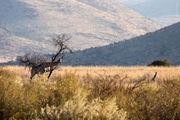 Настоящий жираф / ЮАР