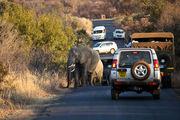 Пробка со слонами / ЮАР