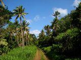 Местная дорога / Вануату