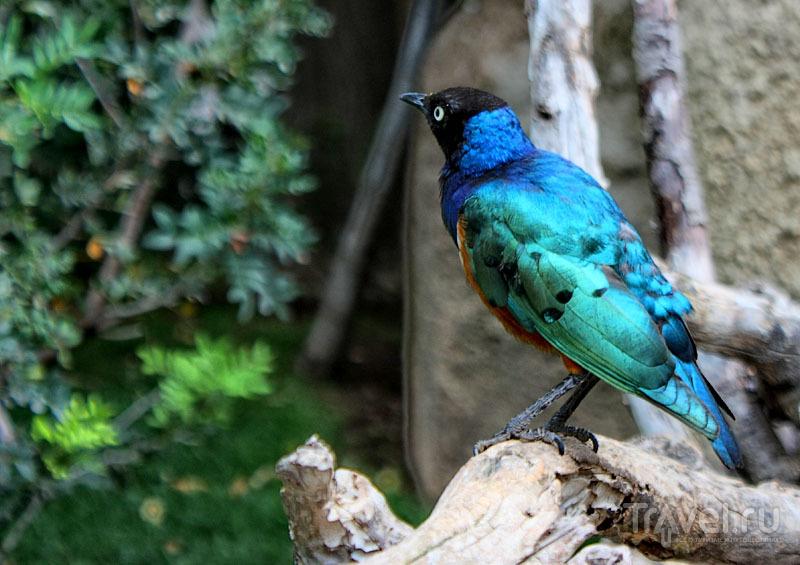 """Птица из """"Биопарка"""" в Валенсии, Испания / Фото из Испании"""