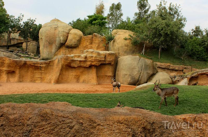 """Животные в """"Биопарке"""" Валенсии, Испания / Фото из Испании"""