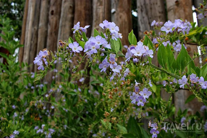 """Цветы в """"Биопарке"""" Валенсии, Испания / Фото из Испании"""
