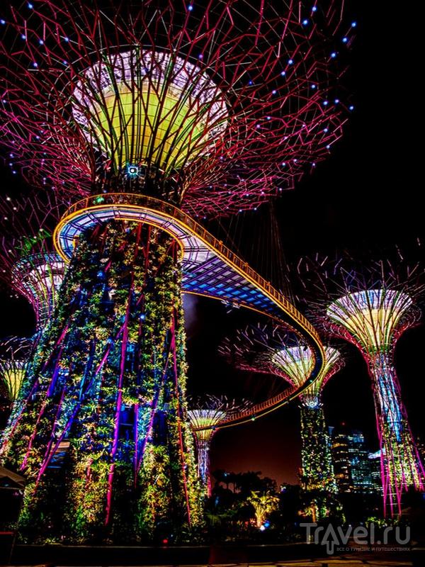 """Сады у залива"" (Gardens by the Bay) в Сингапуре / Сингапур"