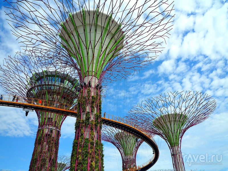"""Гигантские стальные """"деревья"""" в парке """"Сады у залива"""", Сингапур / Сингапур"""