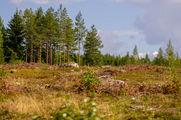 Лес в хорошую погоду / Финляндия