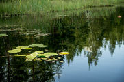 Торфяное озеро / Финляндия