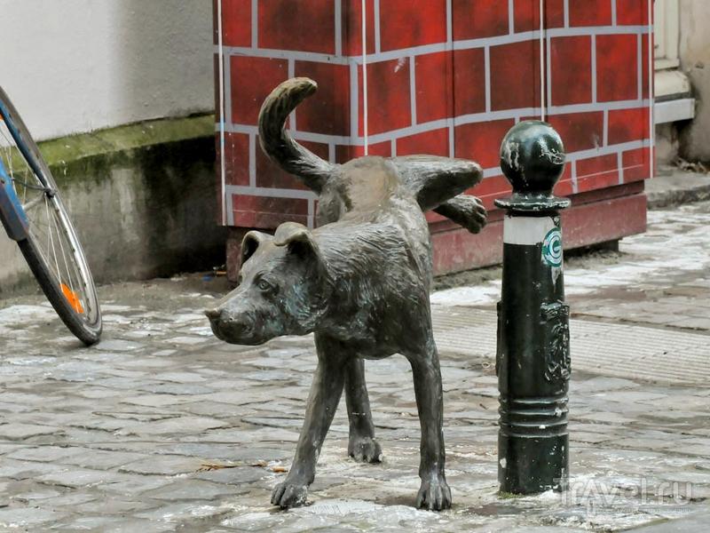 Беспородный пес