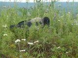 Ворона в траве / Россия