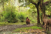 На горных тропах / Папуа-Новая Гвинея