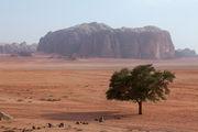 Зеленое дерево / Иордания
