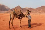 Верблюд под седлом / Иордания