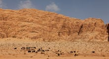 Вокруг одни бараны / Иордания
