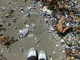 Ноги, песок и ракушки / Чили