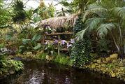 Атмосфера рыбацкой деревушки в лесу / Нидерланды