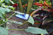 Бабочка на листе / Нидерланды