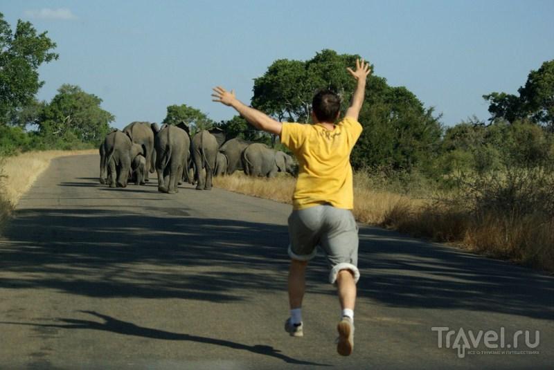 Уходящие слоны / Замбия