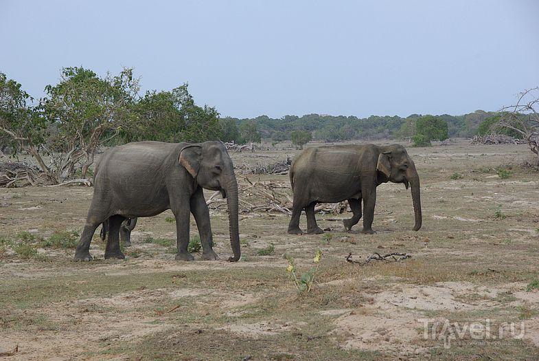 В национальном парке Ялла / Замбия
