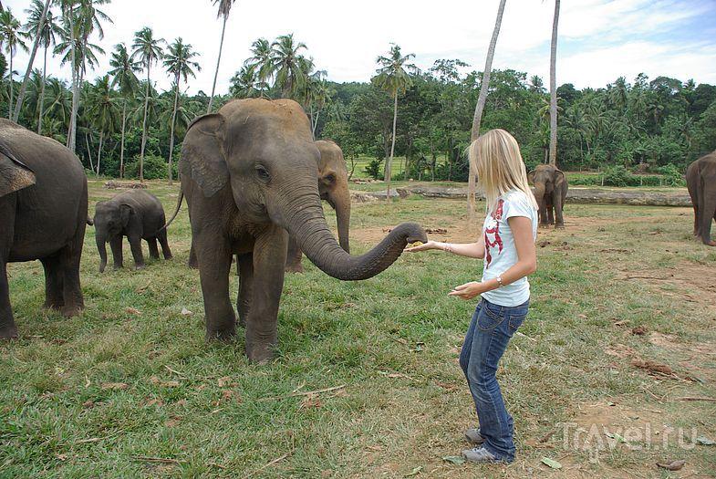 Общение со слоном / Замбия