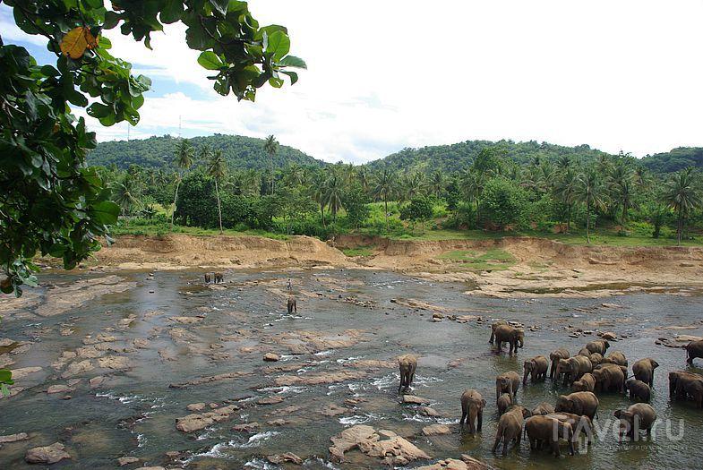 Купание в реке / Замбия