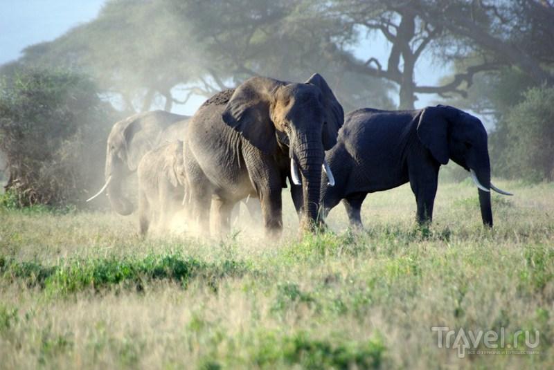 Национальный парк Амбосели / Замбия
