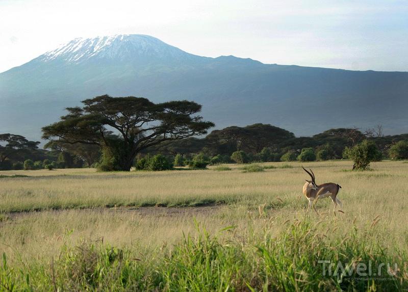 На заднем плане - Килиманджаро / Замбия