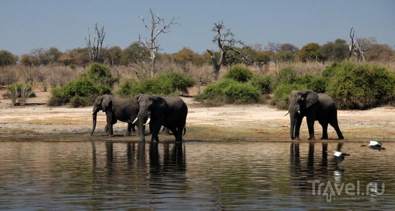 Национальный парк Чобе / Замбия