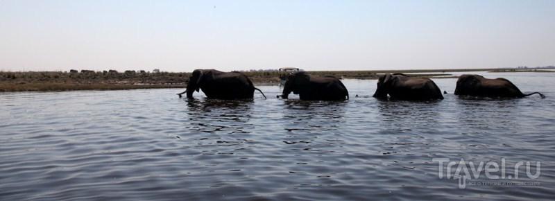 Выходят из реки / Замбия