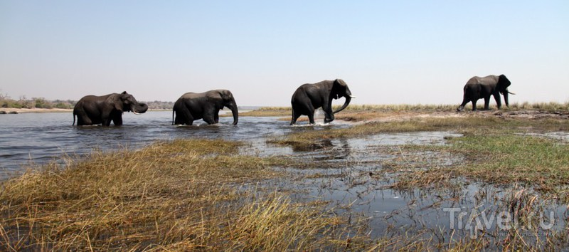 После заплыва / Замбия
