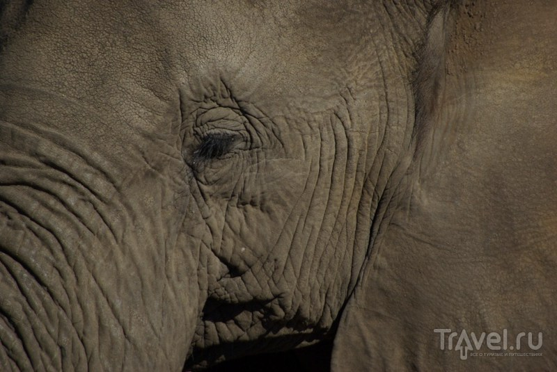 Глаз с ресницами / Замбия
