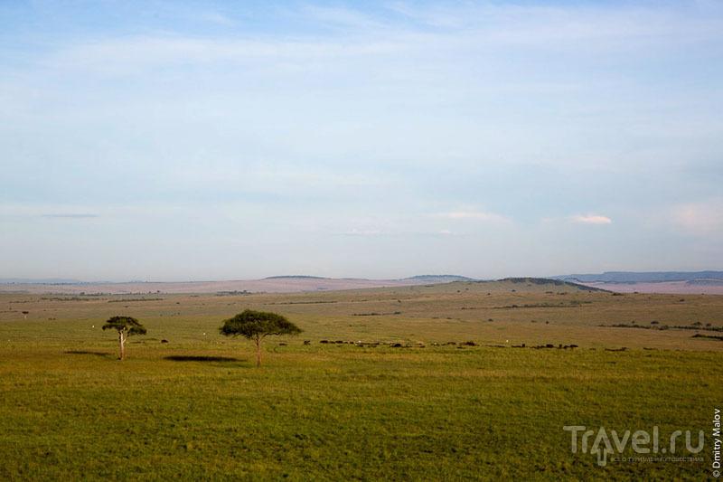 Зеленые равнины национального парка Масаи-Мара, Кения / Фото из Кении