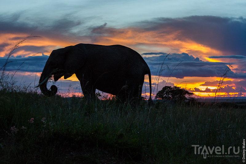 Рассвет в национальном парке Масаи-Мара, Кения / Фото из Кении