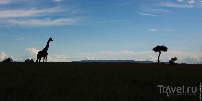 Раннее утро в национальном парке Масаи-Мара, Кения / Фото из Кении