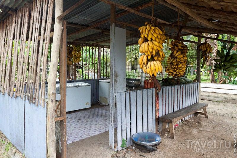 Кухня на острове Косрае, Микронезия / Фото из Микронезии