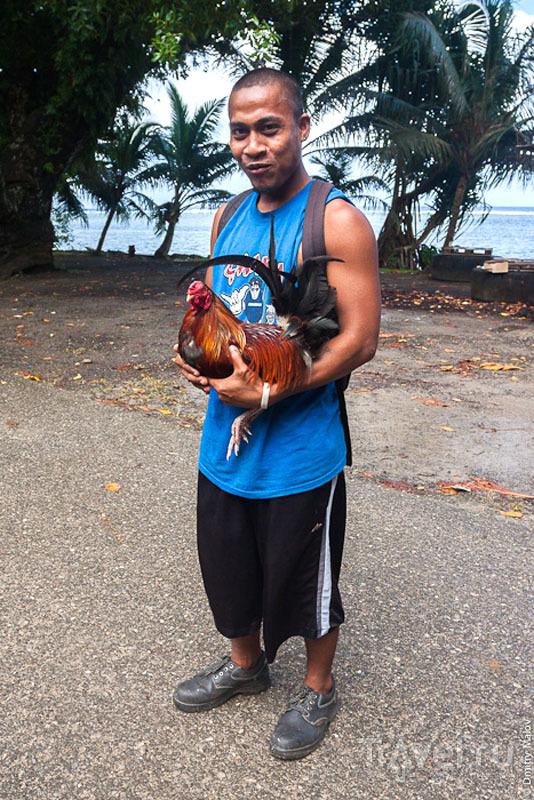 Участник петушиных боев с острова Косрае, Микронезия / Фото из Микронезии