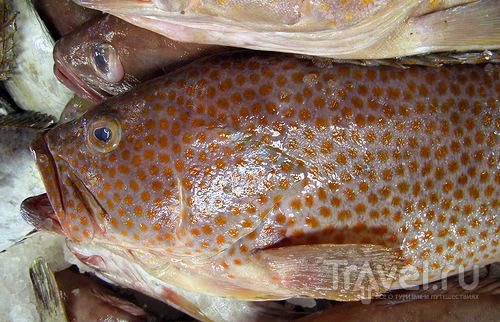 Рыба на прилавке / ОАЭ