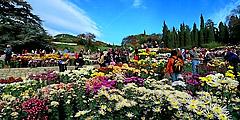 Ботаническому саду - 200 лет. // sevtaksi.com