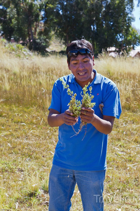 Вкусная и полезная трава / Перу