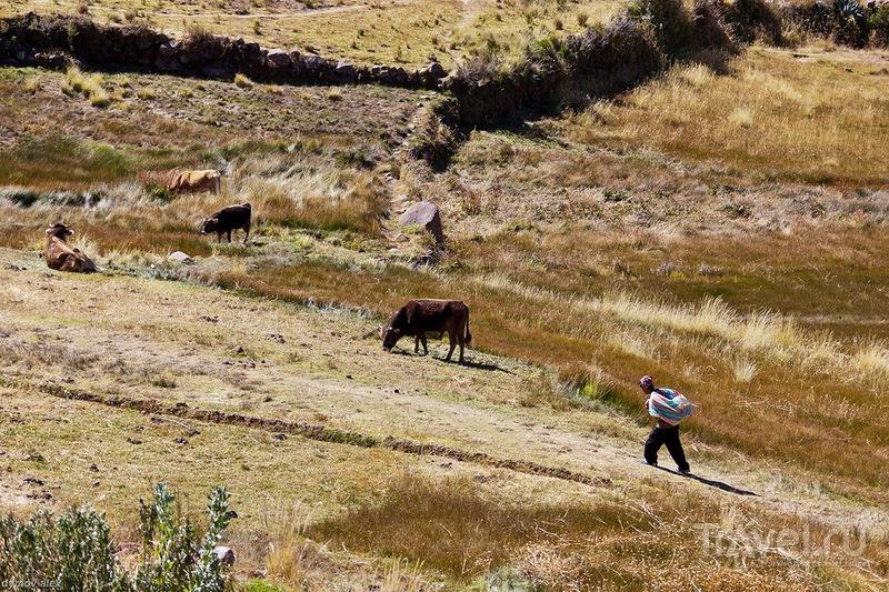 На пастбище / Перу
