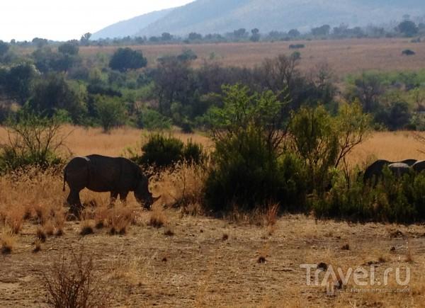 Пытка носорогами / ЮАР