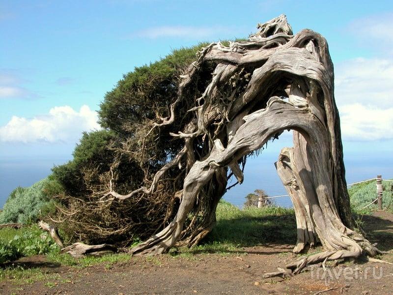 Витые кустарники на острове Иерро / Испания