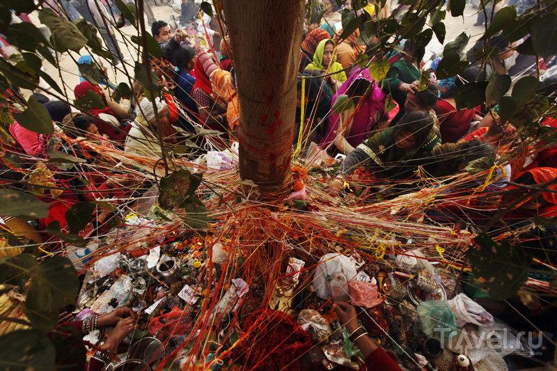 Ритуал возле дерева Баньян / Индия