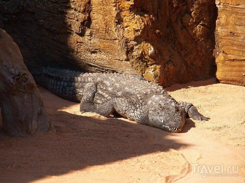 Крокодилы иногда вылезают / Испания