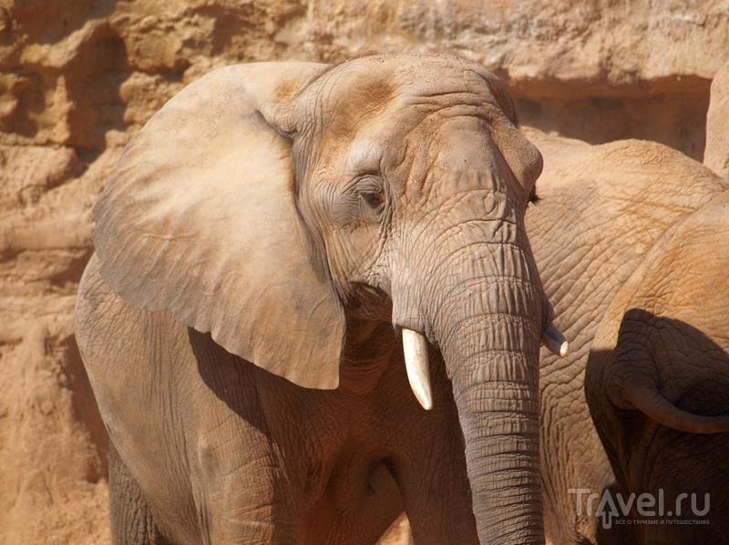 Семья слонов / Испания